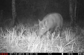 Was kann ich mit einer Wildkamera alles überwachen?